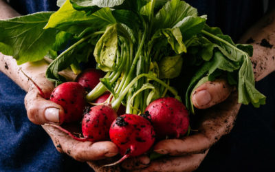 What are the advantages (and disadvantages) of 'going organic'?